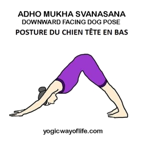Adho Mukha Svanasana - la posture du chien tête en bas - the downward facing dog pose
