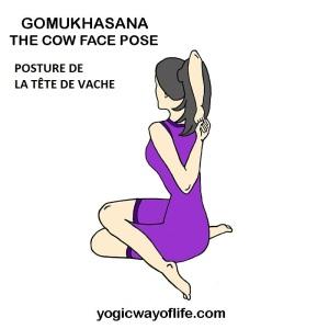 Gomukhasana - la posture de la tête de vache - the cow face pose