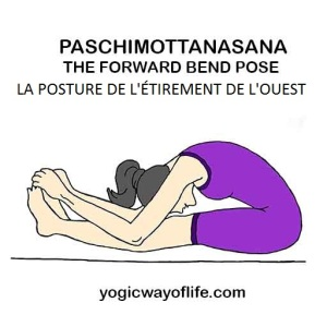 Paschimottanasana - la posture de l'étirement du dos - the forward bend pose
