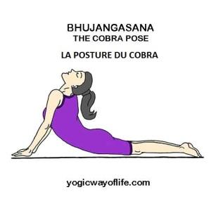 Bhujangasana - la posture du cobra - the cobra pose pour renforcer le système IMMUNITAIRE