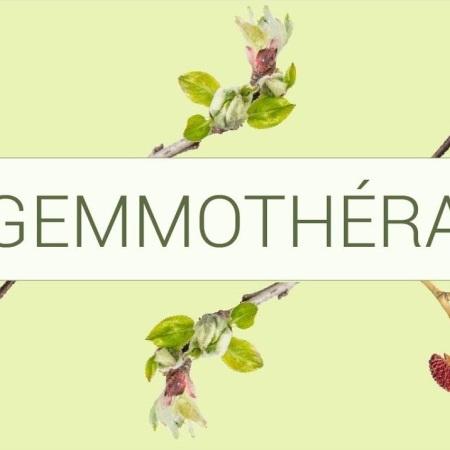 La gemmothérapie - la thérapie par les bourgeons